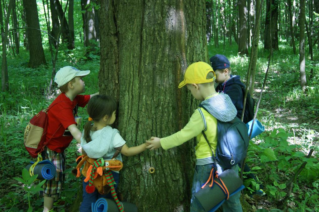 Поход в лес старшая группа 22.05.14